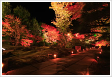 Entsuin Temple, Fall leaves light-up